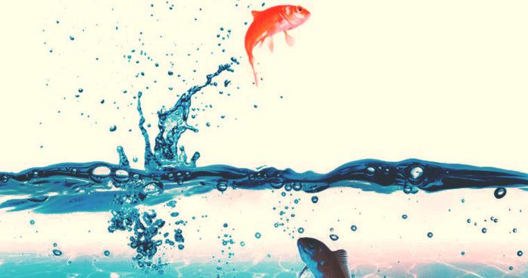 L'importanza del voto: l'ultima cosa di cui si accorge un pesce è l'acqua in cui vive